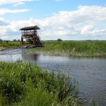 Wieża widokowa - Narwiańskim Parku Narodowym