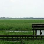 Zieleń - Narwiański Park Narodowy