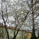 Stacja SGGW: wiosna