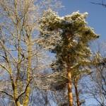 Podkowa Leśna - Las zimą