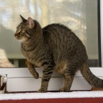 Podkowa Leśna - Kot Miluś