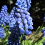 Podkowa Leśna - kwiaty
